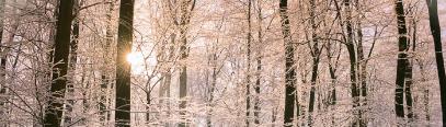 Die  Haut im Winter